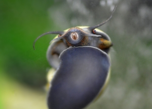 Close-up view of a snail