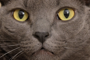Close-up of a cat's face, using a D7000