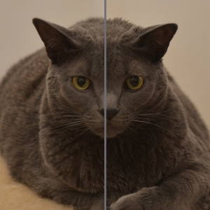 Gimli the cat, hand-held and monopod photos compared